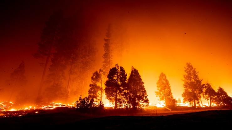 Pożary w Kalifornii.  W Los Angeles padł rekord temperatury
