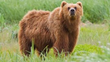 Bokser pobił niedźwiedzia. Mężczyzna trafił do szpitala