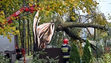 Cztery ofiary wichur nad Polską. Wiatr powala drzewa i zrywa dachy