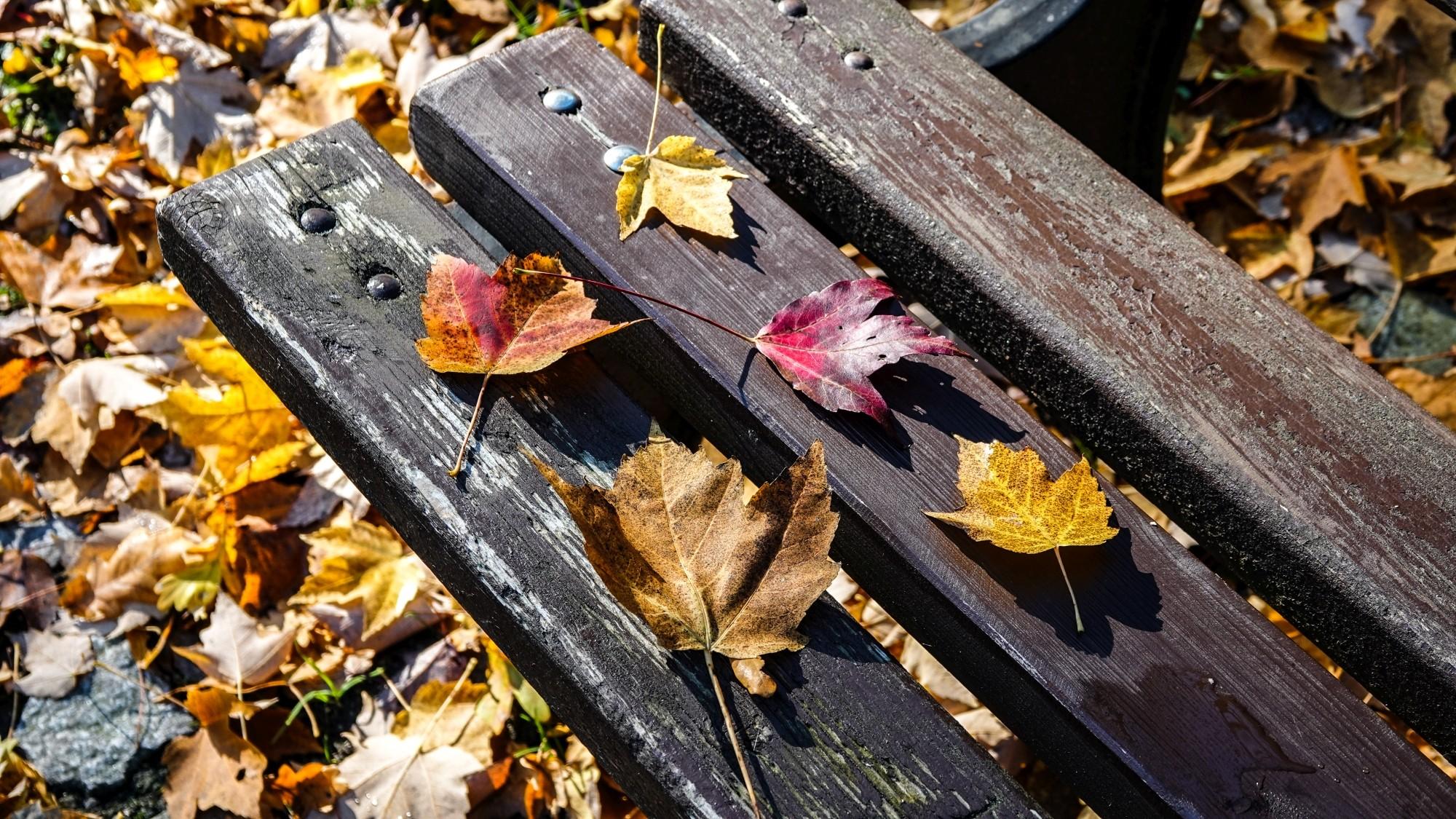 Wszystkie barwy jesieni - zdjęcie 2