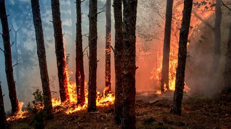 Duże zagrożenie pożarowe w siedmiu województwach