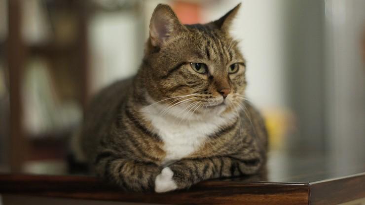 87-latka miała gotować koty, a ich ciałami karmić inne zwierzęta