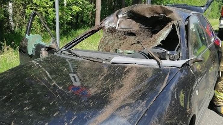 Łoś wskoczył na jadący samochód. Dwie osoby w szpitalu