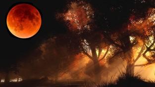 20-09-2021 05:56 Zobacz na niebie pełnię Księżyca Żniwiarzy, który otwiera doroczny Festiwal Jesieni