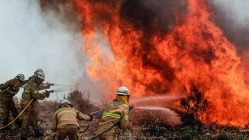 Bohaterowie po długiej walce z żywiołem. Zdjęcie portugalskich strażaków obiegło świat