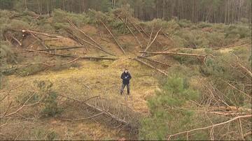"""W Łebie wycięto kilkaset drzew. """"To jest rzeź"""""""