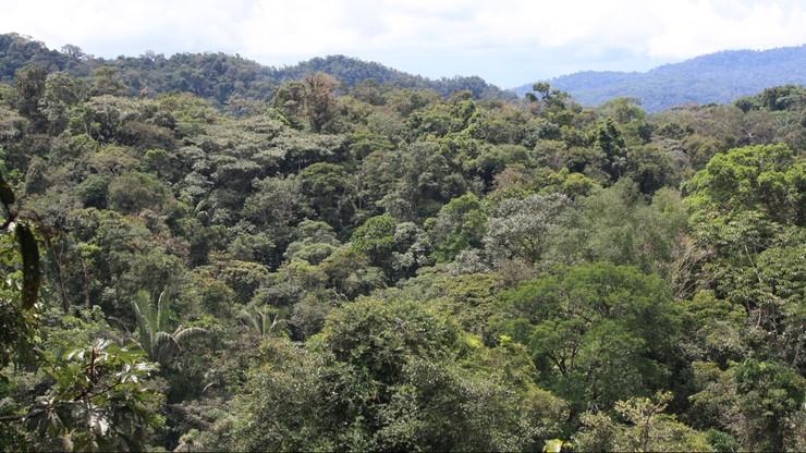 Przeżył katastrofę, zaginął w lasach Amazonii. Spędził tam pięć tygodni