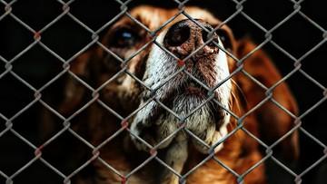 100 tys. zł za zabicie zwierzęcia. W życie wchodzą nowe przepisy