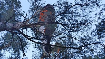Paralotniarz zawisł na drzewie. Nim zdjęli go strażacy, zdążył zmarznąć