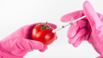 MŚ przeciwne GMO w Polsce. Ale uprawy dopuszczalne w specjalnych strefach