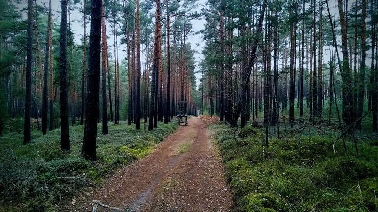 Niemcy. Ojciec i syn znaleźli amunicję w lesie. Polali ją gorącym woskiem, doszło do eksplozji