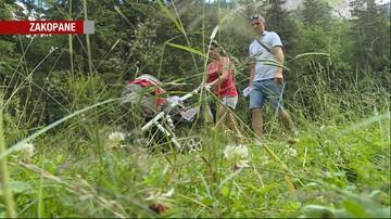 Uwaga na żmije w Tatrach! Odnotowano pierwsze przypadki ukąszeń