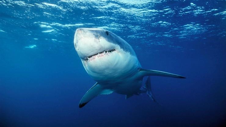 Irlandia: rekin zaatakował wędkarza, który go złowił