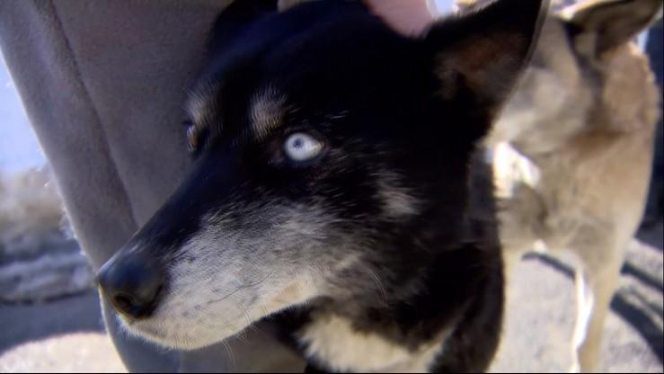 90 tys. zł na nowe hospicjum dla psów ze Staruszkowa. Dzięki waszej pomocy