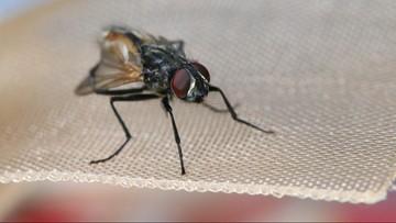 Próbował zabić muchę. Wysadził pół domu