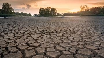 Susza w Polsce. Krytyczna sytuacja na polach, uprawy zagrożone. Płoną lasy i łąki