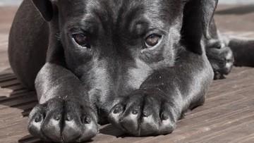 Wyrzucił psa do śmietnika, bo zwierzę załatwiło się w domu