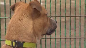 Pół roku więzienia za wyrzucenie psa z balkonu. Sąd: to było zwykłe barbarzyństwo