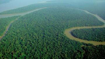 Na Facebooku kupisz... lasy Amazonii. Witryna nie zamknie nielegalnych aukcji