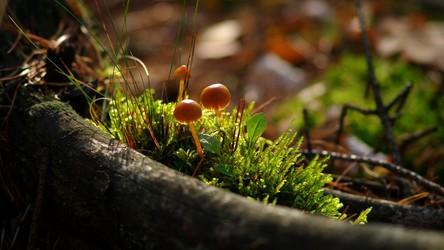 Okazuje się, że grzybki halucynogenne są dużo skuteczniejsze niż antydepresanty