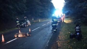 Zderzenie samochodu i motocykla z dzikiem. Zwierzę nie przeżyło [DRASTYCZNE ZDJĘCIA]