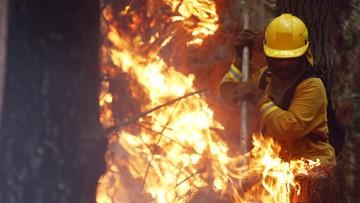 Dramatyczna walka z ogniem w Chile. Lasy ciągle płoną