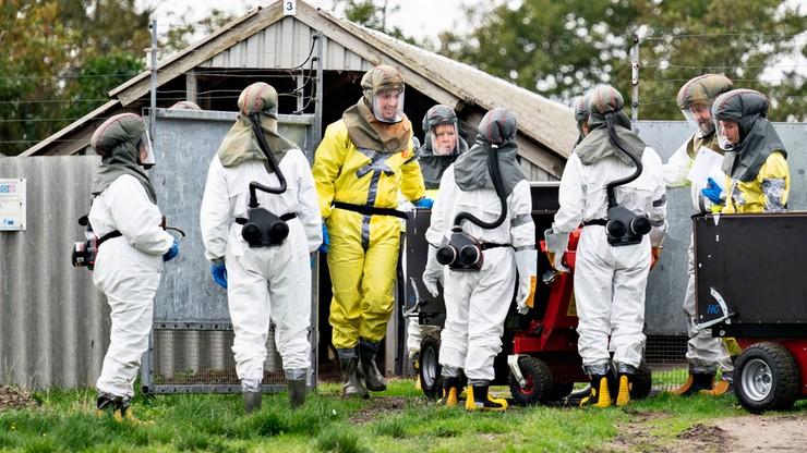 """Dania: kolejne osoby zakażone zmutowanym koronawirusem. """"Ryzyko nowej pandemii"""""""