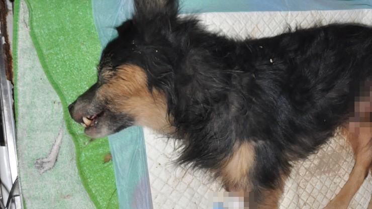 Pies zakopany żywcem. Na policję zgłosił się jego właściciel
