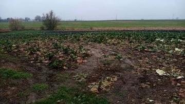 Seniorzy ukradli z pola kapustę wartą 3 tys. zł