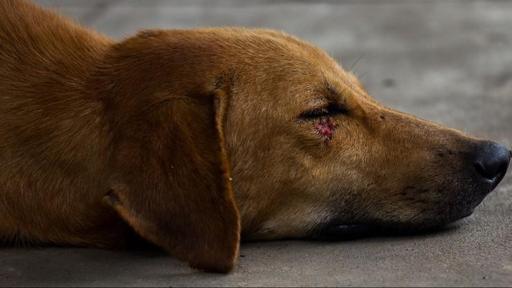 Kielce. Kara więzienia za próbę zabicia psa