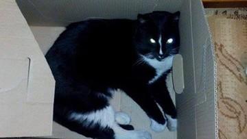 Ktoś odciął kotu przednie łapki i ogon. Zwierzę konało w męczarniach