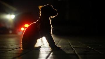 Godzina policyjna: czy można wyprowadzić psa? Resort zdrowia wyjaśnia