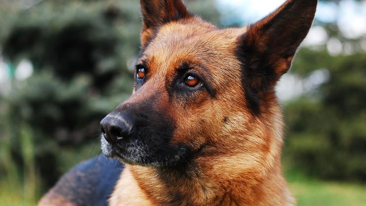 Pierwszy pies śmiertelną ofiarą Covid-19