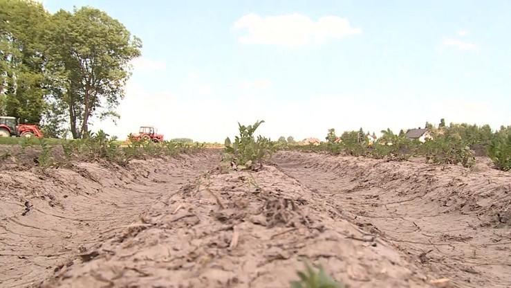 Straty z powodu suszy wzrosły do ponad 2 mld zł