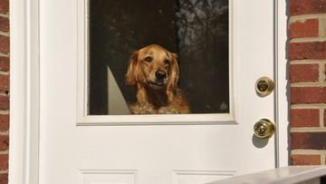 """""""Pies w Koronie"""". Oferują pomoc dla właścicieli zwierząt na kwarantannie"""