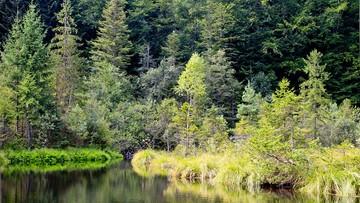 Plan zniszczenia bezcennej Puszczy Karpackiej podpisany - alarmują ekolodzy. Możliwa interwencja KE