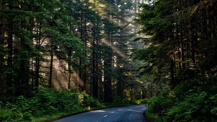 Zwłoki kobiety znalezione w aucie w lesie. Prokuratura umorzy śledztwo