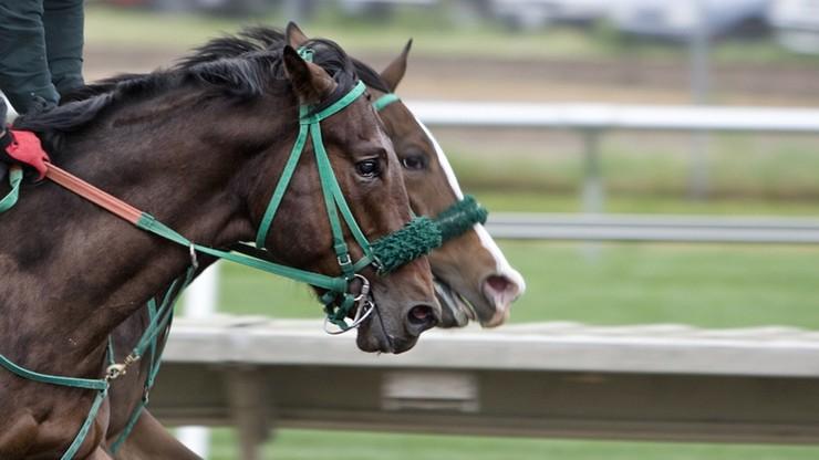 Koń w garniturze od znanego projektanta. Tak ubrany ruszy w wyścigach konnych