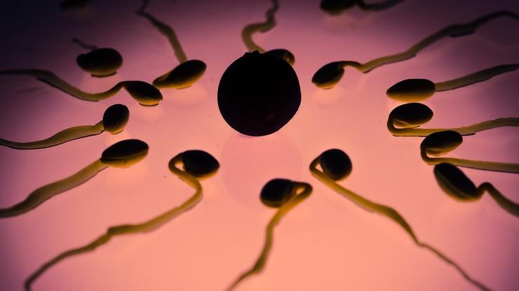 Mogło dojść do pomieszania plemników u 26 par. Holenderska klinika in vitro przyznaje się do błędu