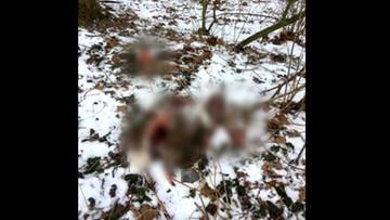 Psy obdarte ze skóry znalezione w lesie