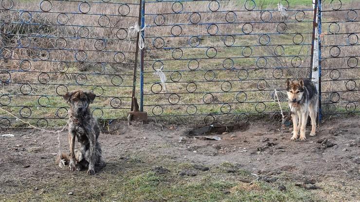 Psy bez dostępu do wody i karmy przywiązane do ogrodzenia. Właścicielce grozi do 5 lat więzienia