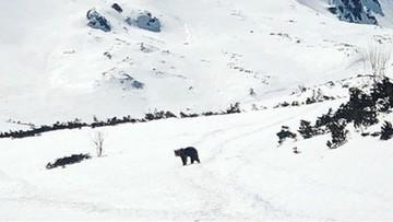 Zwierzęta korzystają z pandemii. Zamknięcie lasów sprzyja przyrodzie