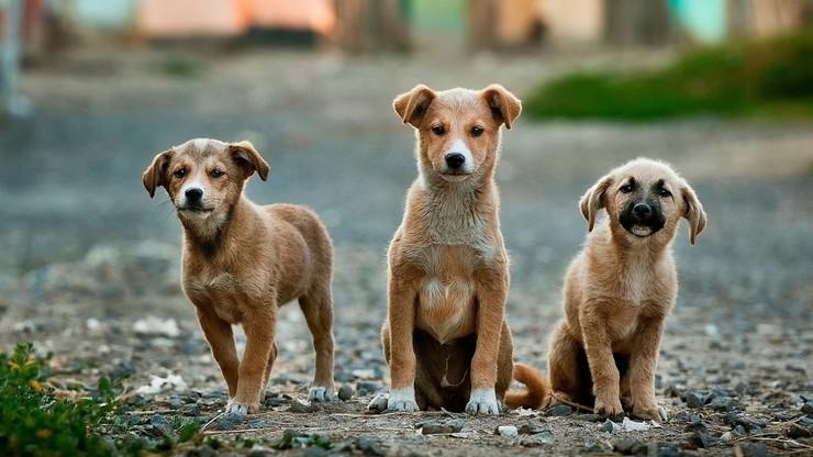 Australia. Zabili psy ze schroniska w obawie przed rozprzestrzenianiem koronawirusa