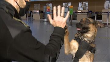 Policyjne psy na emeryturze. Ustawa zapewni im godną starość