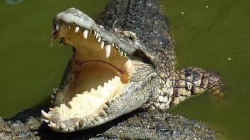 Wygrał walkę o życie z krokodylem. Otworzył jego paszczę gołymi rękami