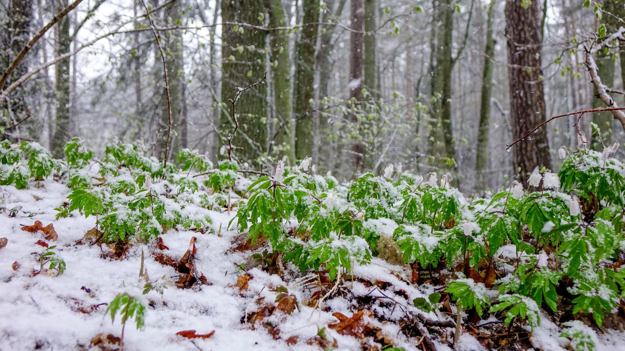 Zima w maju - zdjęcie 2