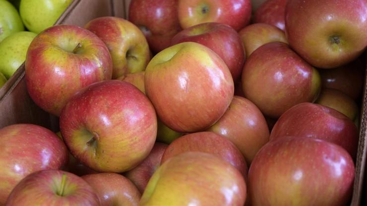 Jabłkowy deficyt wymusił import. Po kilku latach koncentrat na soki znowu sprowadzamy z Chin