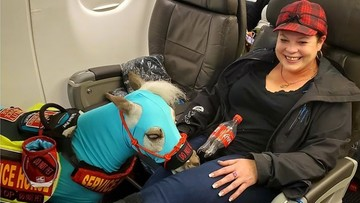 """Zabrała konia na pokład samolotu. """"Kupiłam bilety z dodatkowym miejscem na nogi"""""""