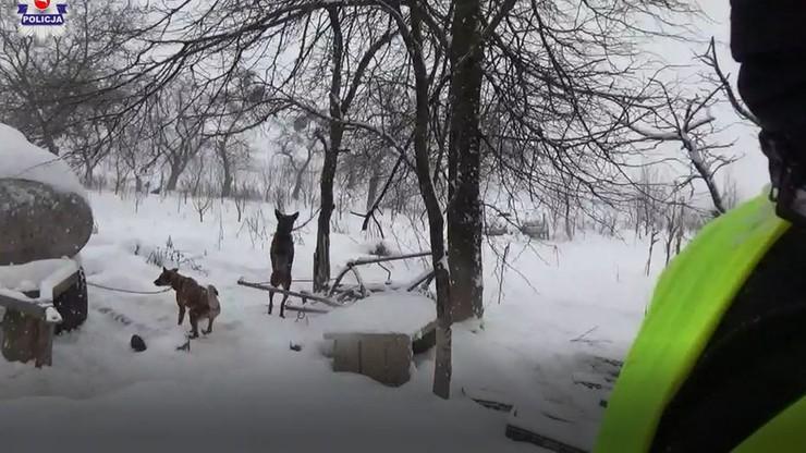Na mrozie i krótkich łańcuchach. Policja odebrała 18 psów hodowcy