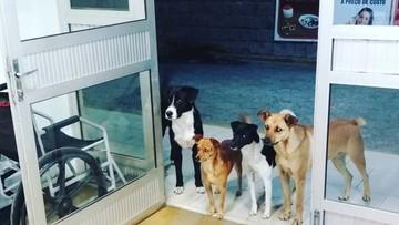 Bezdomny trafił do szpitala, jego cztery psy czekały na niego przed wejściem całą noc